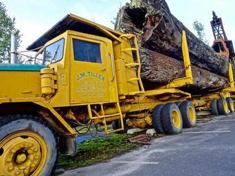 Přeprava dřeva