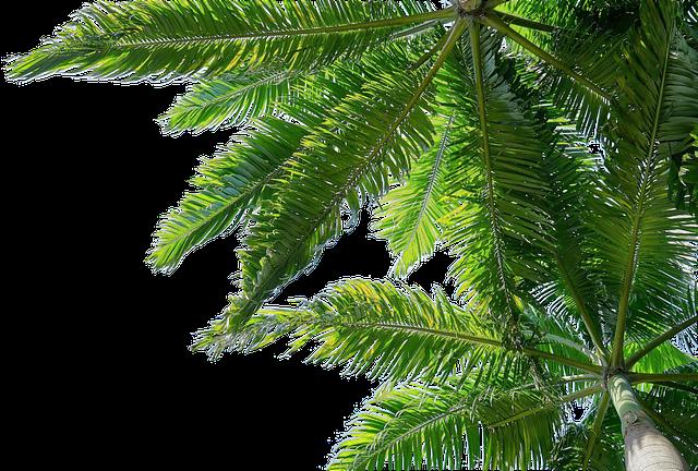 obrázek palmy