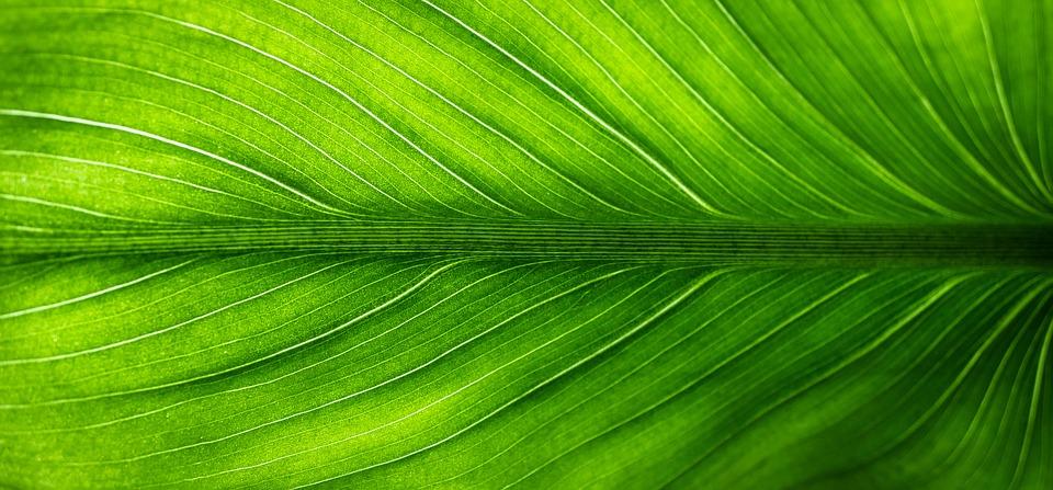 zelený list